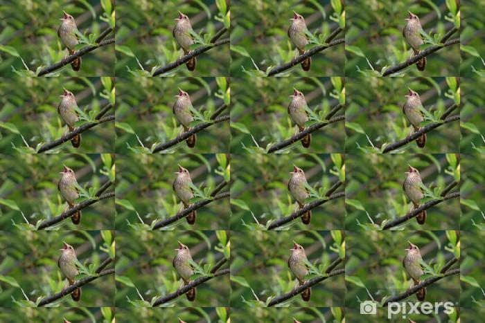 Songbird (River Warbler) singing in its natural behavior. Vinyl custom-made wallpaper - Birds