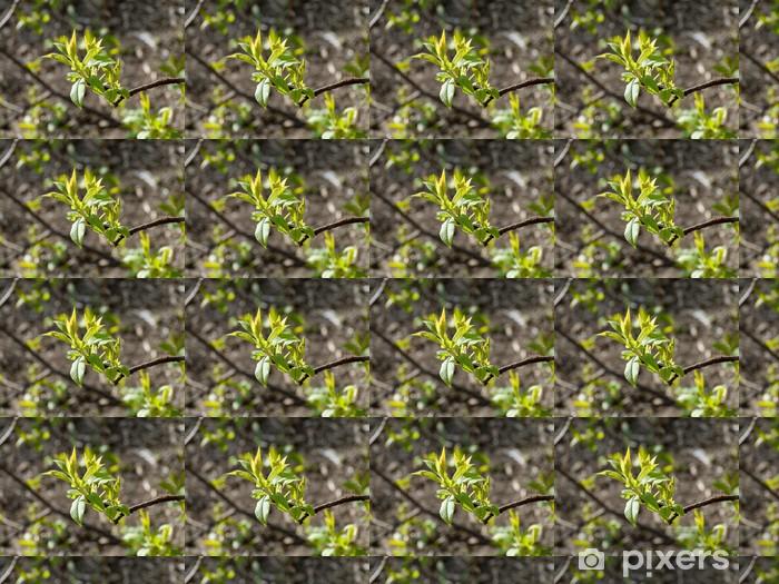 Vinyltapete nach Maß Frühling - Bäume