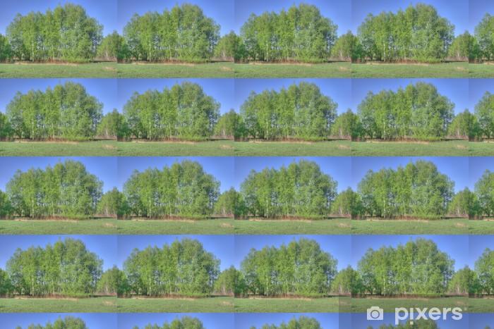 Vinyltapete nach Maß Birken wald - Wälder