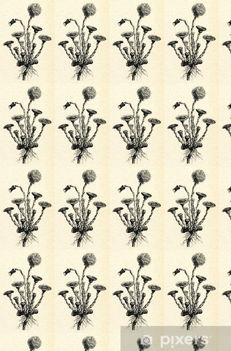 Papier peint vinyle sur mesure Tussilage (Tussilago farfara) - Plantes