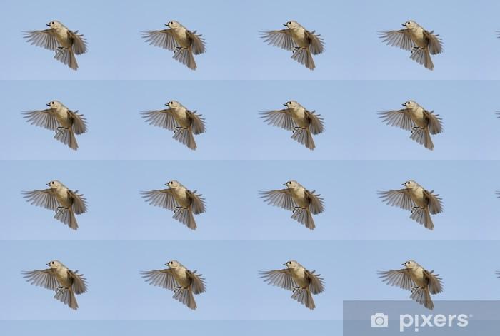 Papier peint vinyle sur mesure Mésange bicolore (Baeolophus bicolor) In Flight - Oiseaux