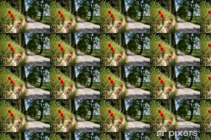 Vinylová tapeta na míru Červené vlčí máky s toskánskými silnici lemované stromy - Venkov