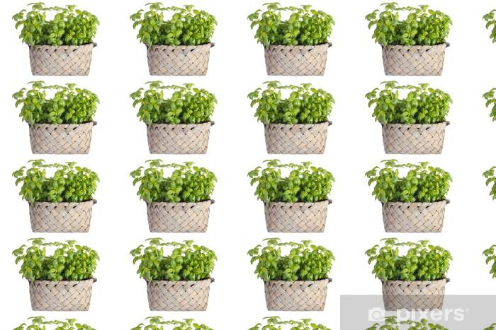 Tapeta na wymiar winylowa Ziele bazylii sadzenia w koszu, odizolowane na białym - Rośliny