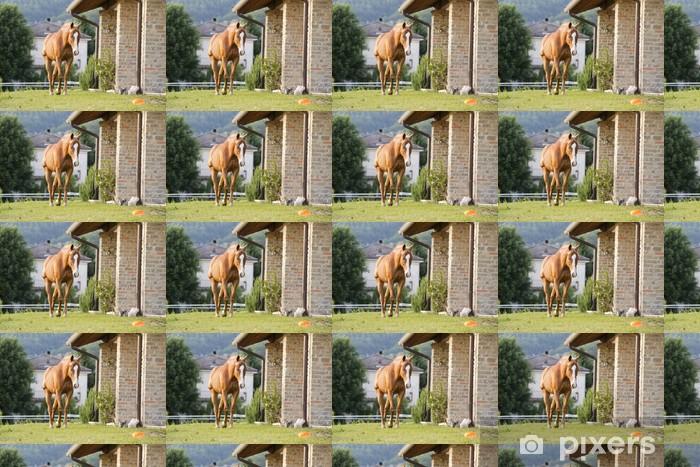 Tapeta na wymiar winylowa Koń na zewnątrz domu - Ssaki