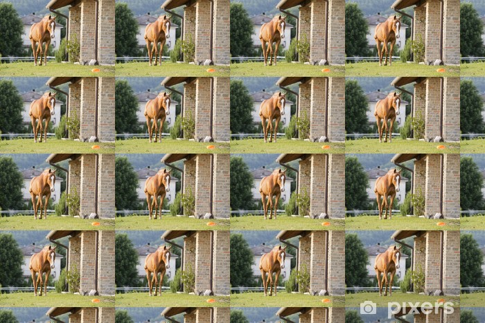 horse outside the house Vinyl custom-made wallpaper - Mammals