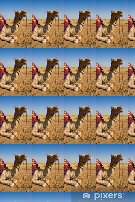 Camel in Thar desert Vinyl custom-made wallpaper - Asia