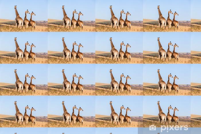 Tapeta na wymiar winylowa Trzy żyrafy dzikich zwierząt błękitne niebo - Tematy