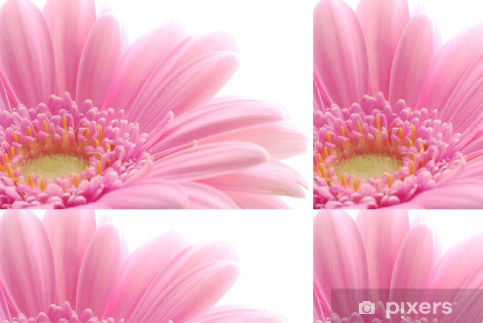 pink gerbera Vinyl Wallpaper - Seasons