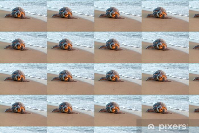 Tapeta na wymiar winylowa Żółw morski - Inne Inne