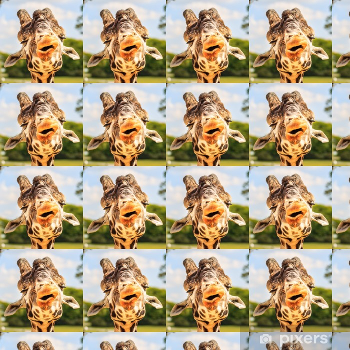 Vinylová tapeta na míru Žirafa (Giraffa camelopardalis) žvýkání. - Témata