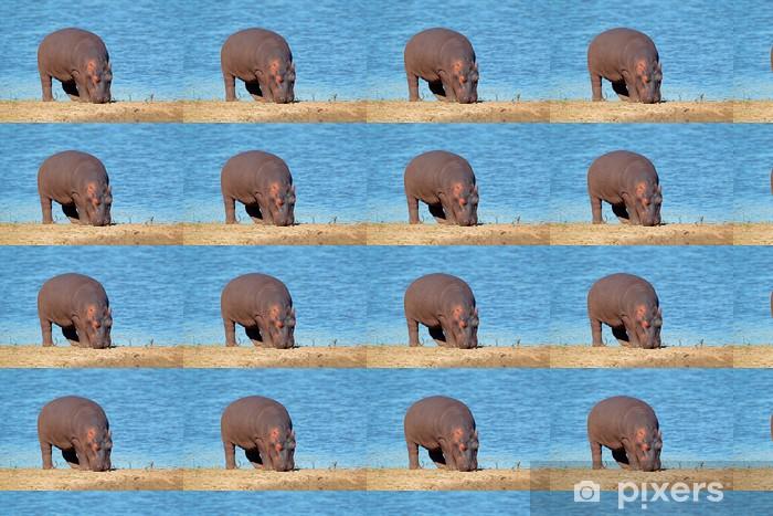 Papier peint vinyle sur mesure Hippopotame - Mammifères