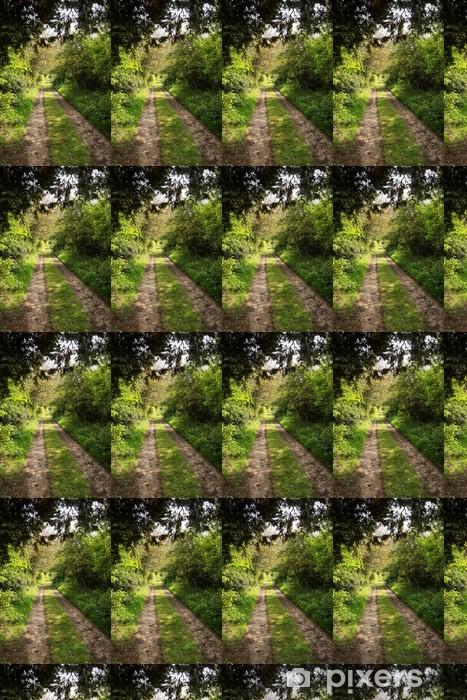 Tapeta na wymiar winylowa Droga w lesie - Krajobraz wiejski