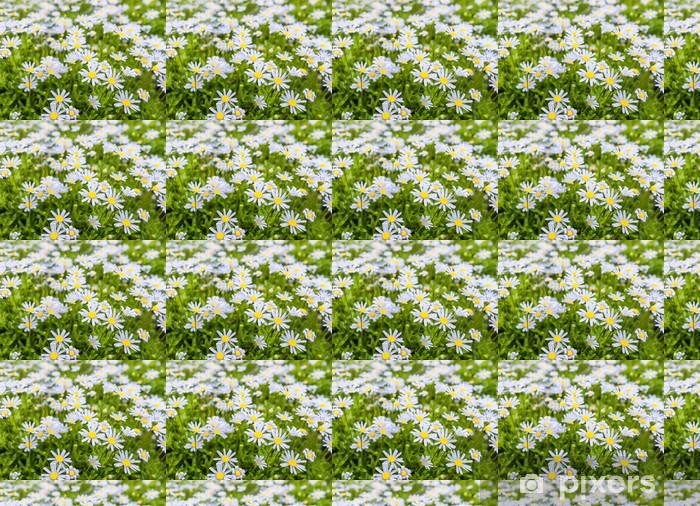 Vinyltapete nach Maß Angehende und blühende blaue Marguerite Pflanzen - Jahreszeiten