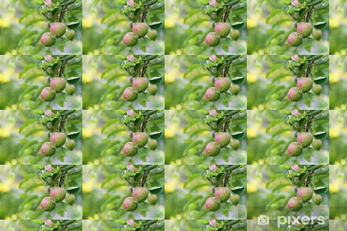 Apple fruits in garden after rain. Vinyl custom-made wallpaper - Seasons