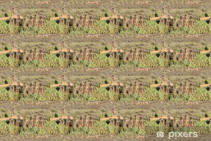 Papier peint vinyle sur mesure Groupe de Meerkat dans l'herbe - Animaux marins