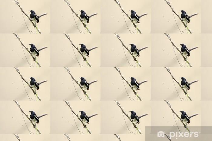 Vinyl behang, op maat gemaakt Mooie mannelijke Oriental Magpie-Robin zit op draad - Vogels