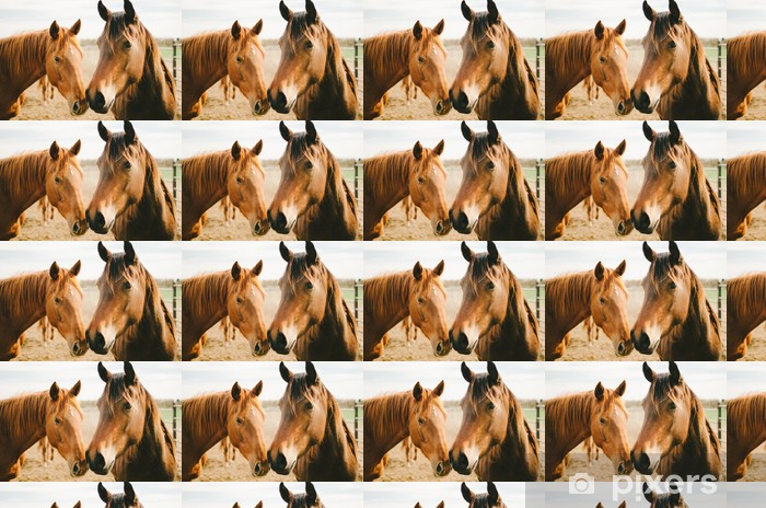 Two Chestnut Horses Vinyl custom-made wallpaper - Themes