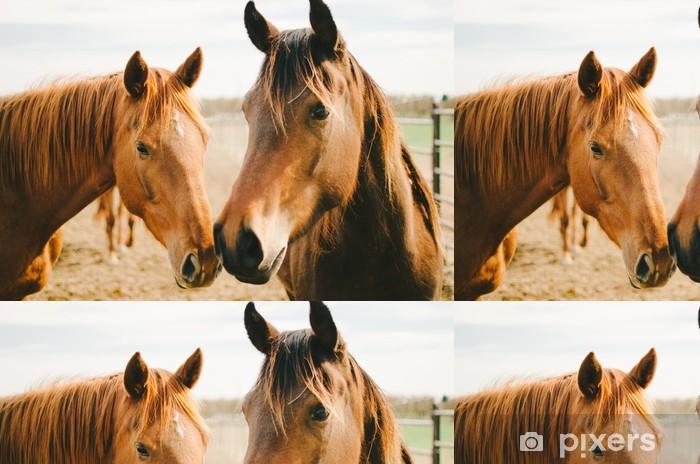 Vinylová Tapeta Dva Chestnut koně - Témata
