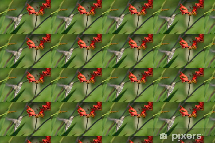 Papel pintado estándar a medida Anás Hummingbird se alimentan de Crocosmia Flores - Aves
