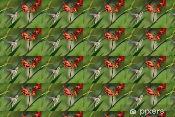 Måttanpassad vinyltapet Annas Hummingbird som matar på Crocosmia blommor - Fåglar