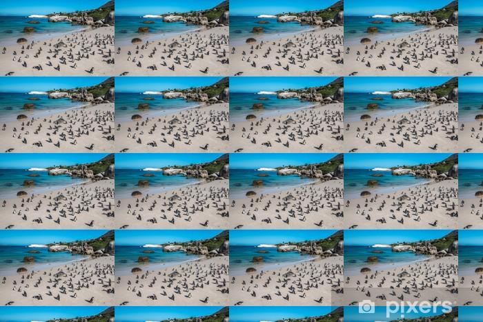 Vinyltapete nach Maß Pinguin in Boulders Beach in der Nähe von Kapstadt - Afrika
