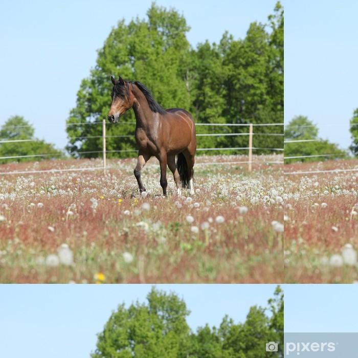 Vinylová Tapeta Amazing hnědá sportovní pony běží na pastvě - Savci