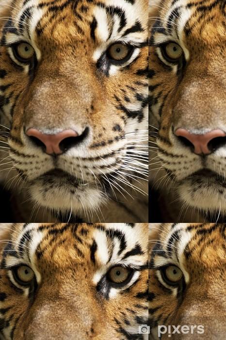 Vinylová Tapeta Tiger obličeje - Témata
