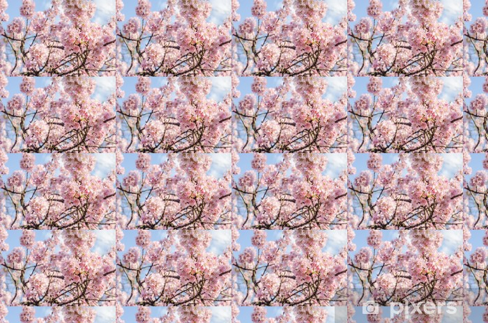 Tapeta na wymiar winylowa Sakura - Kwiat Wiśni - Cherry Blossom - Kwiaty