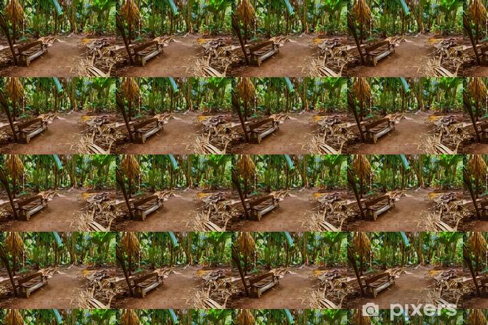 Pathway in jungle - Vallee de Mai - Seychelles Vinyl custom-made wallpaper - Holidays