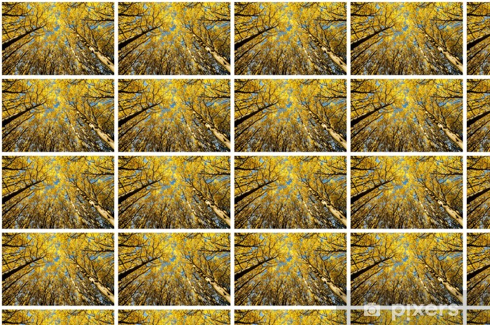 Tapeta na wymiar winylowa Drzewa na tle nieba, jesienią - Sporty na świeżym powietrzu