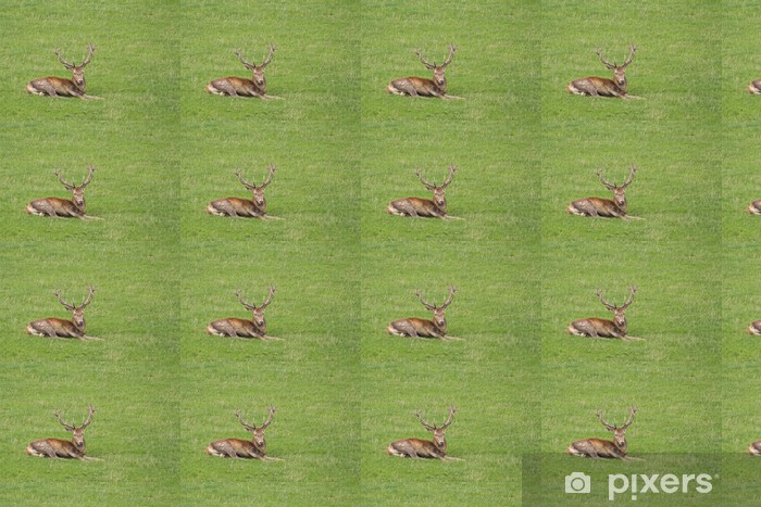Özel Boyutlu Vinil Duvar Kağıdı Kızıl geyik, Cervus elaphus - Memeliler