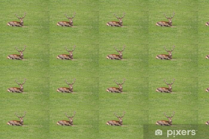 Papier peint vinyle sur mesure Red Deer (Cervus elaphus) - Mammifères