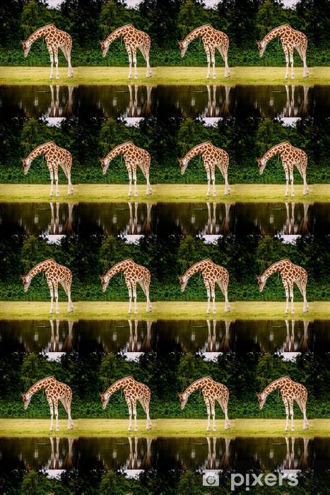 Tapeta na wymiar winylowa Żyrafa patrząc w wodzie - Ssaki