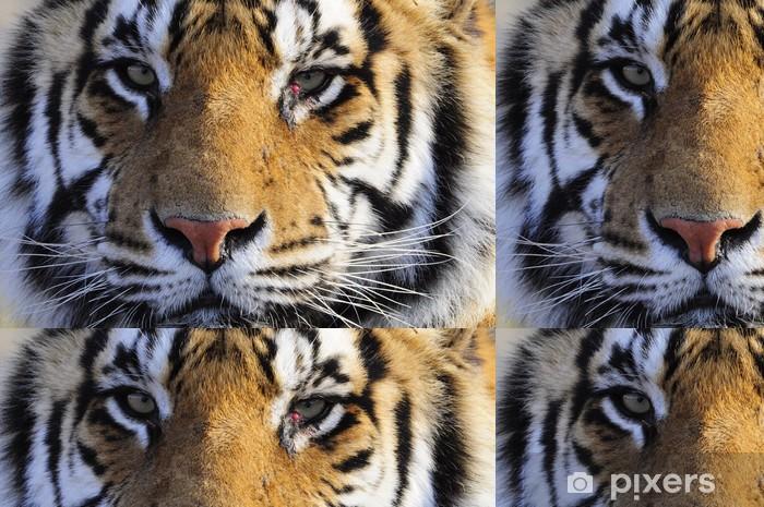 Vinylová Tapeta Detailním portrét záběr bengálského tygra - Témata