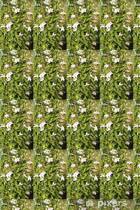 Tapeta na wymiar winylowa Piękne różowe kwiaty w ogrodzie daczy - Dom i ogród
