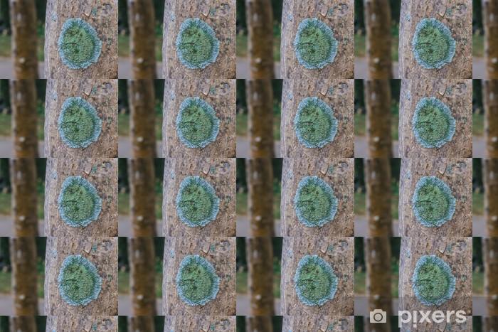 Papier peint vinyle sur mesure Tronc d'un vieil arbre recouvert d'un lichen - Plantes