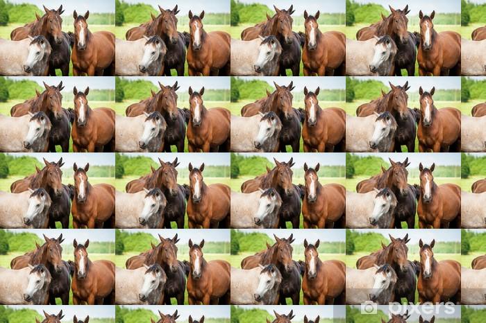 Vinyltapete nach Maß Portrait der Pferde auf der Weide - Einzelsportarten
