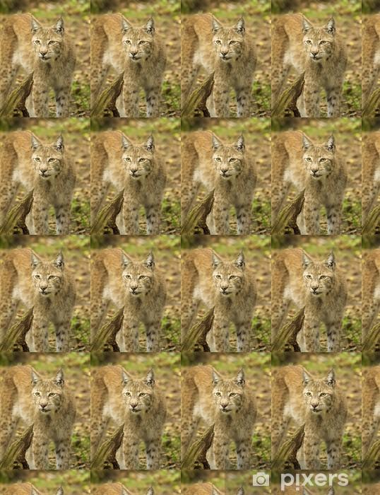 Papier peint vinyle sur mesure Le lynx d'Eurasie - Mammifères