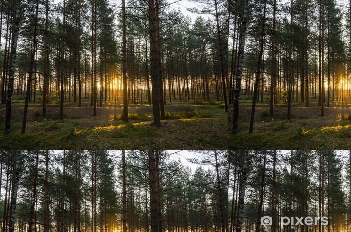 Tapete Wald Sommer Pixers Wir Leben Um Zu Verandern