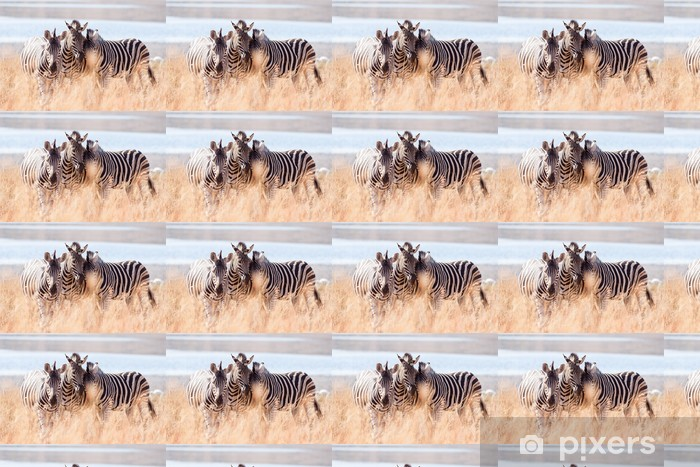 Vinyl behang, op maat gemaakt Een kleine kudde van wilde Burchells Zebra wrijven hoofden in de buurt van een meer - Thema's