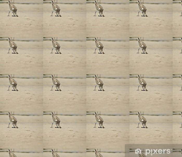 Tapeta na wymiar winylowa Głowy w piasek - Ptaki