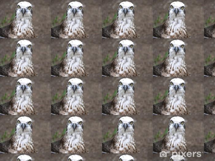 Vinyltapete nach Maß Fischadler - Vögel