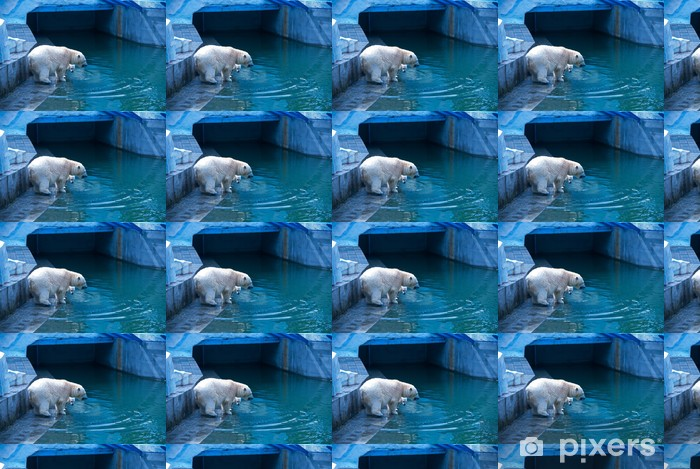 Tapeta na wymiar winylowa Białe niedźwiedzie - Tematy