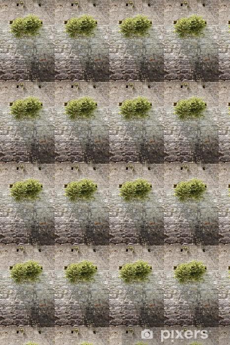Papier peint vinyle sur mesure Câpres sauvage plante contre un mur de pierre - Plantes