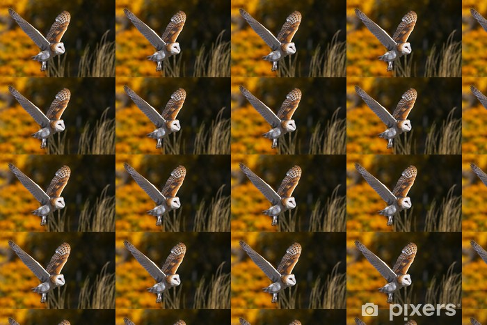 Barn owl in flight Vinyl custom-made wallpaper - Themes