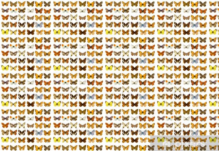 Vinylová tapeta na míru Butterfly set - Ostatní Ostatní