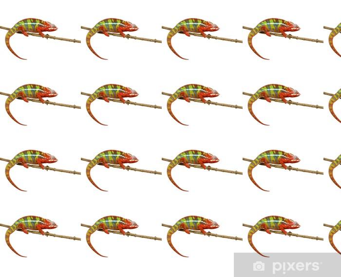 Papier peint vinyle sur mesure Chameleon Furcifer Pardalis - Ambilobe (18 mois) - Animaux imaginaires