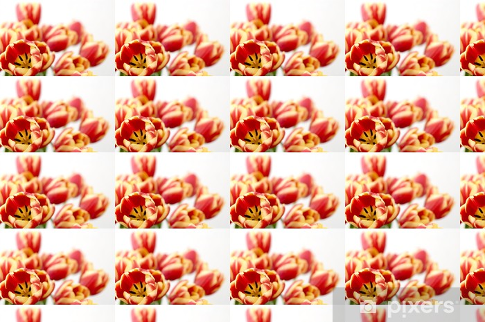 Papier peint vinyle sur mesure Fleurissent tulipes. - Fleurs