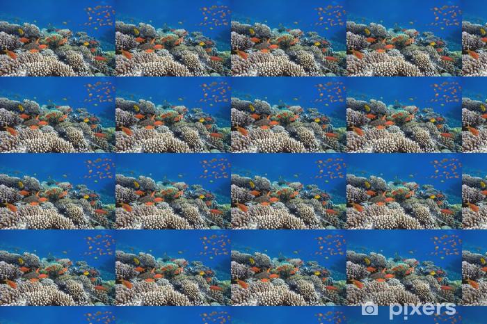 Papier peint vinyle sur mesure Les poissons tropicaux et coraux durs - Animaux marins