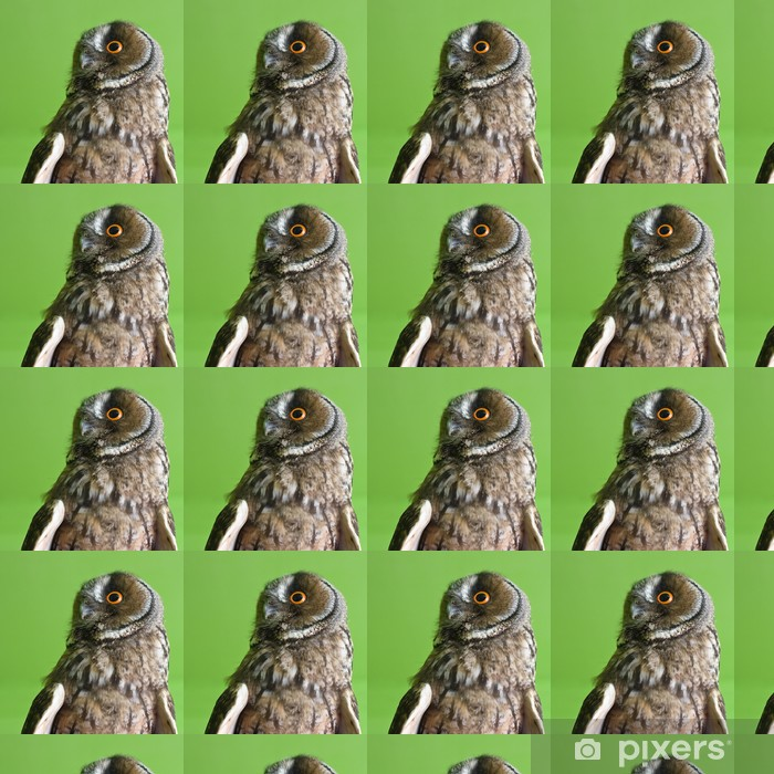 Vinyltapete nach Maß Waldohreule - Vögel